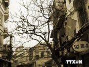 首都河内解放60周年:推介与弘扬文化底蕴浓厚的河内古街