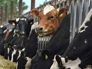 澳大利亚企业拟在广宁省展开菜牛养殖项目