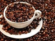 越南同奈省咖啡豆价格创新高