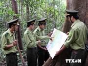 越南十分重视保护发展森林资源工作