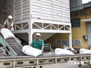 2014年年初以来越南大米出口量达490万吨