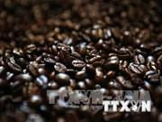 老挝咖啡节推广本国咖啡品牌