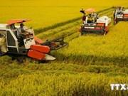 越南九龙江三角洲地区传统特色产品俱乐部问世