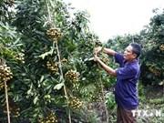 富士通集团协助越南加快信息技术在农业中的应用