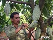 越南可可喜获丰收,价格上涨30%