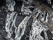 越南广平省山洞窟里发现距今约3亿年的化石