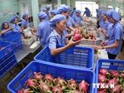 2014年越南蔬菜水果出口总额创历史新高