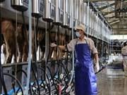 越南乳制品股份公司跻身2014年东盟100强企业榜单