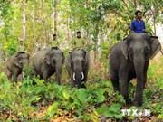 越南政府出资740亿越盾保护同奈省野象群