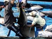 越南平定省计划扩大大洋金枪鱼销售市场