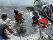 2014年越南金瓯省水产品产量增长10%