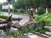 """越南金瓯和庆和两省采取措施 积极主动应对超强台风""""黑格比"""""""