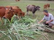 越南老街省与老挝交换扶贫济困经验