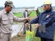 越南胡志明市主动采取措施预防鼠疫