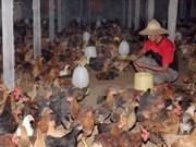阿曼解除从越南和尼泊尔进口家禽肉制品禁令