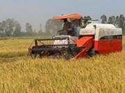 越南将全面展开稻米产业结构重组