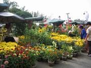 越南芹苴市花农做好花卉培育工作准备抢滩春节花卉市场