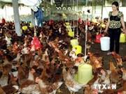 越南河内市成立5个农业产业协会