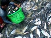 越南查鱼对美国出口猛增