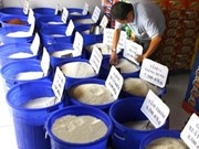越南第二届大米节将吸引许多外企参加