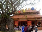 富安省菩提树被承认为越南遗产树