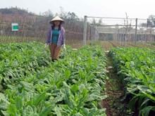 太原省越南良好农业规范认证标准的农场(组图)