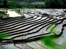 莱州省山区同胞陆续忙于引水准备进入新的种植季节(组图)