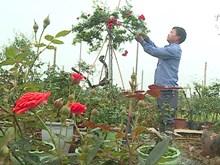 美丽鲜花带着花农们的诚意