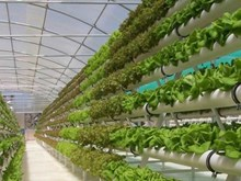 越南绿色蔬菜高科技生产模式走出国门