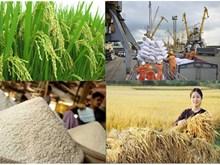 越南大米生产和加工基地颇受中国企业的好评