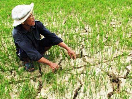 """""""九龙江三角洲可持续发展模式转换方向,有效适应气候变化""""会议明日召开"""