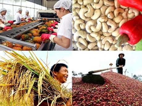越南努力加大对欧盟市场农产品出口力度